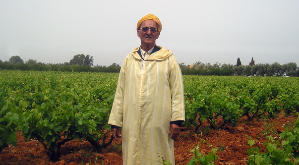 Mohammed vine grower